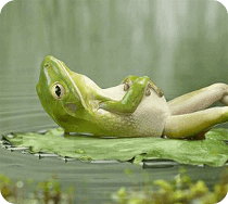 Relaxation version française - Programme Detox