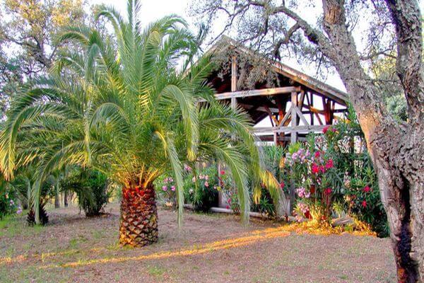 Trimurti - Exterieur palmier