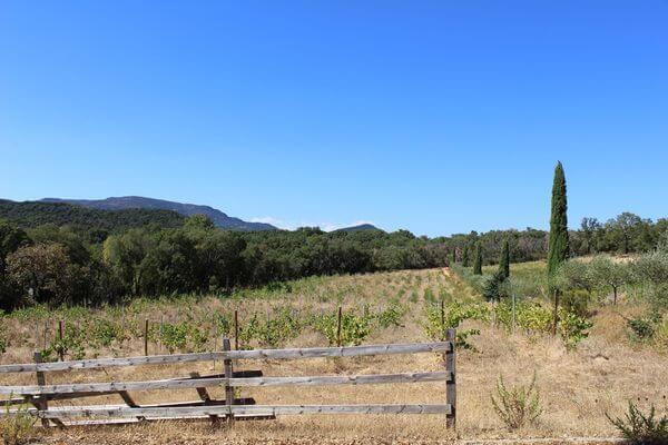 Trimurti - Exterieur - Vue des vignes 1