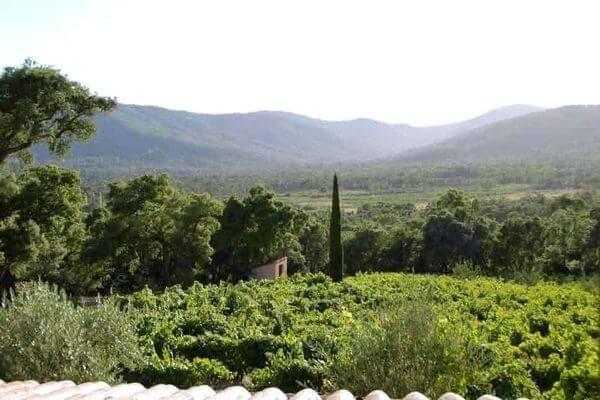 Trimurti - Exterieur - Vue des vignes 2