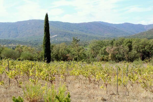 Trimurti - Exterieur - Vue des vignes 3